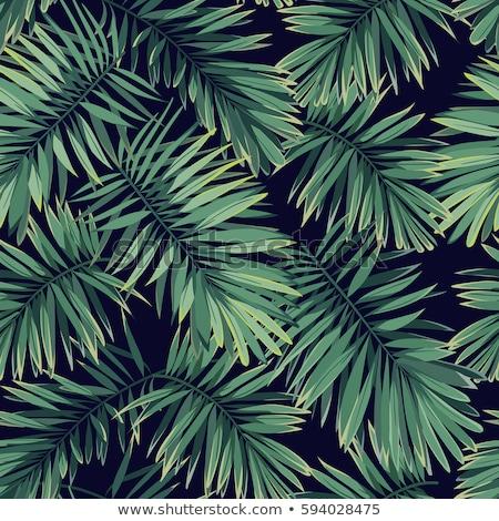 Végtelenített álca minta pálmalevelek sötét zöld Stock fotó © Karamio