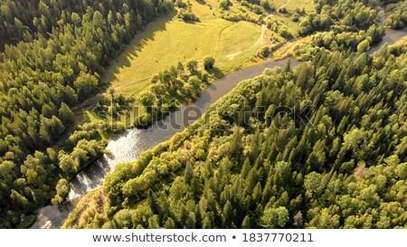 лес парка деревья походов пути Сток-фото © Steffus