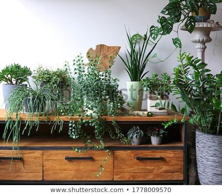 Different decorative plants Stock photo © bluering