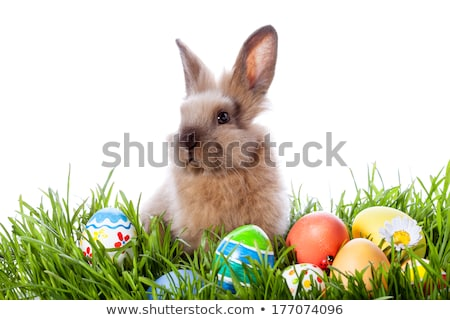 Stock photo: White beautiful rabbit, Easter bunny