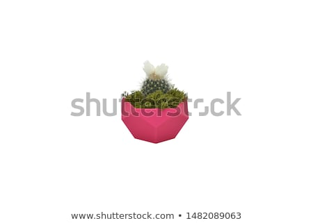 Rose pot isolated on the white background Stock photo © Elnur