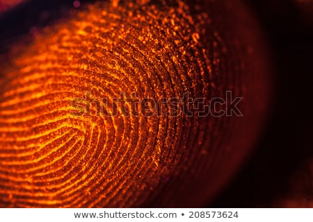 Highly Detailed Fingerprint Stock photo © idesign