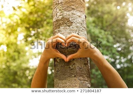 árvore amor ilustração pôr do sol folhas planta Foto stock © adrenalina