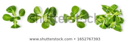 fresh corn salad leaves Stock photo © Digifoodstock