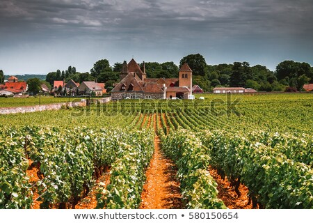 Vineyards in FFrench Burgundy  Stock photo © Hofmeester