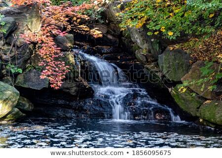 夏 · ヤシの木 · ツリー · 春 · 背景 - ストックフォト © bluering