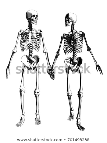 skelet · grijs · volwassen · 3d · render · geneeskunde · kleur - stockfoto © is2