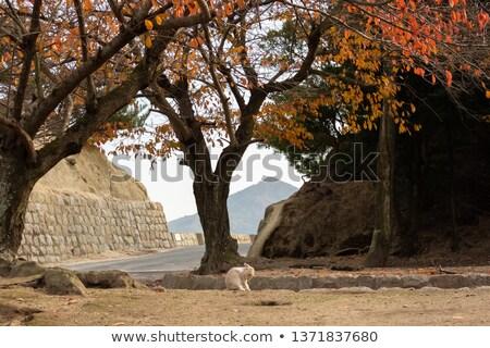 hojas · de · otoño · techo · metal · textura · resumen · naturaleza - foto stock © craig