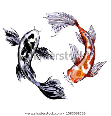 Altın koi balık siyah noktalar Stok fotoğraf © pikepicture