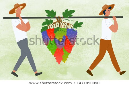 Stock photo: Farmers Carrying Grapes Bunches, Berries Harvest