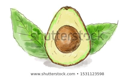 Avocado vruchten bladeren aquarel tekening witte Stockfoto © patrimonio