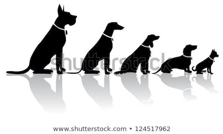 собака сидят животного собачка глядя вектора Сток-фото © robuart