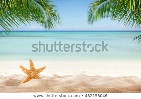 Kagylók tengerparti homok vakáció nyár ünnepek tengerpart Stock fotó © dolgachov