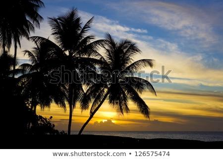 puesta · de · sol · Caribe · mar · tortuga · playa · árboles - foto stock © phbcz