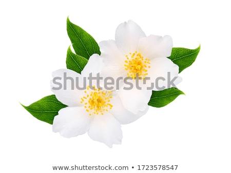 hermosa · flores · flor · hoja · jardín · verano - foto stock © Masha