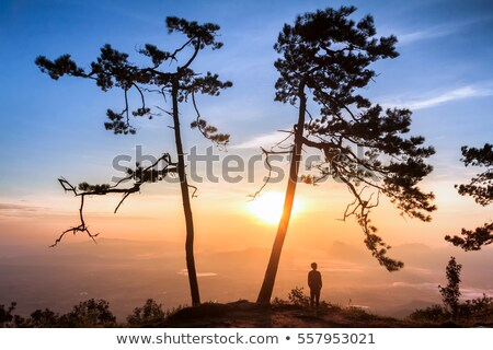 Man stood in park Stock photo © photography33