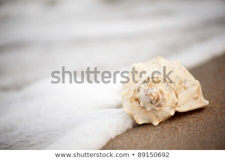 Selective focus on the shell Stock photo © Anna_Om