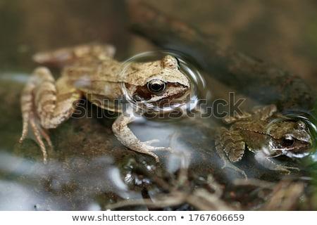 カエル · を実行して · 自然 · 緑 · 動物 · 環境 - ストックフォト © alvinge