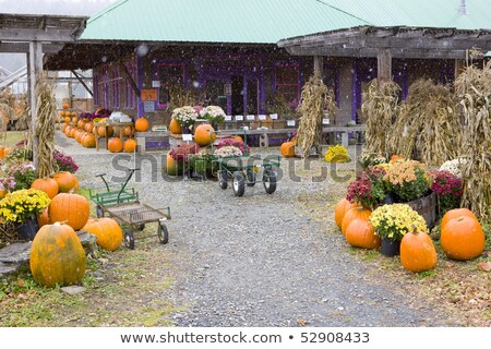 Halloween Vermont USA ősz ünnepek szabadtér Stock fotó © phbcz