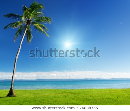 Caribbean sea and field of green grass Stock photo © ozaiachin