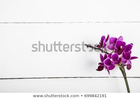 green potty on white background Stock photo © shutswis
