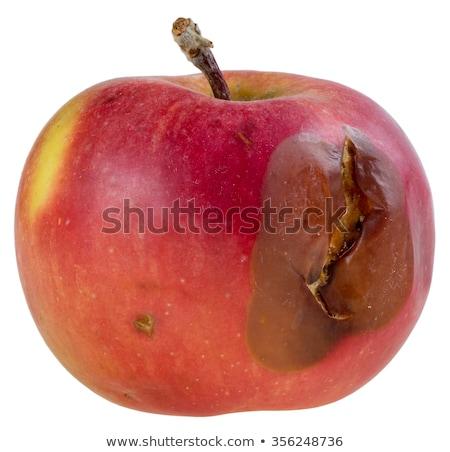 свежие красный коричневый гнилой яблоки изолированный Сток-фото © digitalr