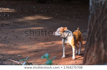 trapped dog stock photo © ssilver