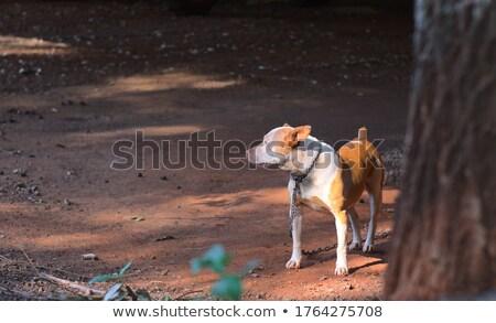 állat · mentés · örökbefogadás · kutya · hát · kamerába - stock fotó © ssilver
