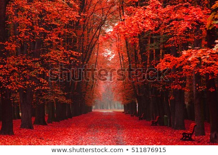 velho · carvalho · árvore · outono · parque · sol - foto stock © jonnysek