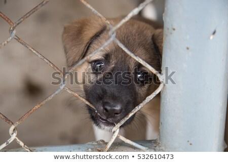 Hond kooi eenzaam gesloten ogen haren Stockfoto © wime