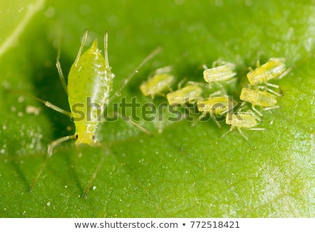 red white insect pest on plants Stock photo © stocker