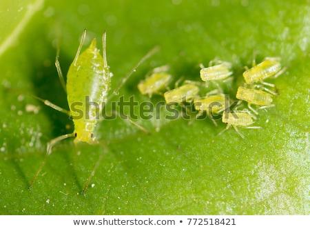 bicho · folha · planta · haste · inseto · espera - foto stock © stocker