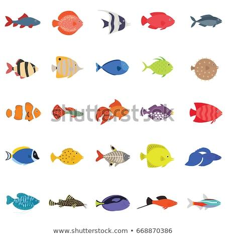 Illusztráció hal Vörös-tenger víz művészet óceán Stock fotó © bmonteny