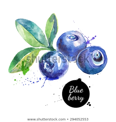 blueberry vector with waterdrop and green leaves stock photo © anonedsgn