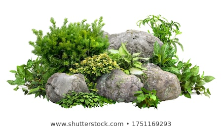 Shrubs and Boulder Stock photo © derocz