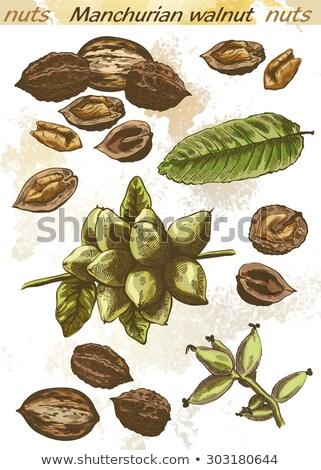 Noix croissant loin fruits vert médecine Photo stock © krugloff