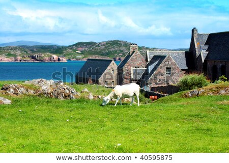 Beautiful seashore at Iona in Scotland Stock photo © Julietphotography