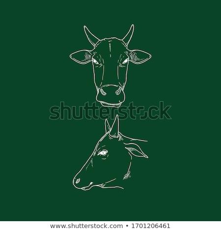 ストックフォト: 牛 · 頭 · アイコン · チョーク · 手描き