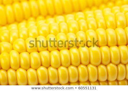 ripe corn cob close up stock photo © stevanovicigor