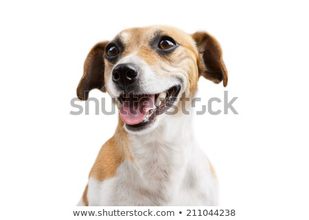 Câine şedinţei alb studio animal Imagine de stoc © vauvau
