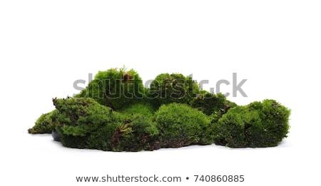 small white fungus grows in grass Stock photo © romvo
