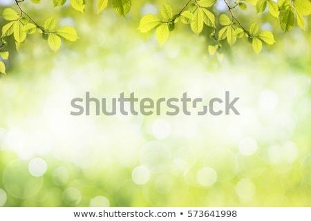 Bahar yaprakları beyaz soyut arka plan Stok fotoğraf © matt_post
