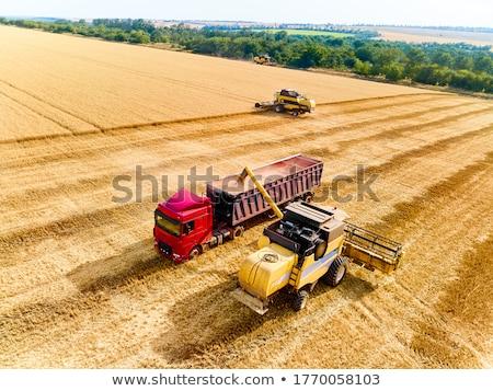agricola · trattore · campo · coltivato · mais - foto d'archivio © stevanovicigor