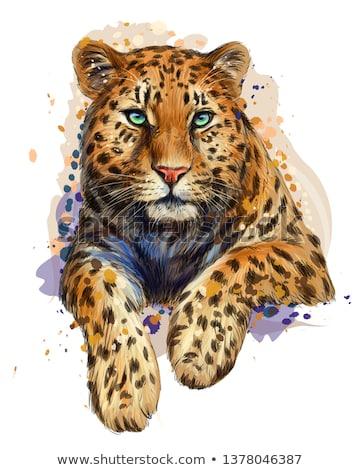 Jaguar Cat Portrait Stock photo © THP
