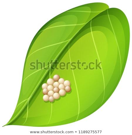 Moth eggs on leaf Stock photo © bluering