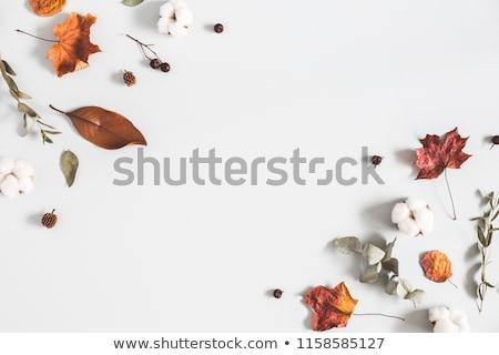 осень Top мнение листьев цветы Сток-фото © kostins
