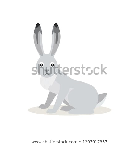 Icon of White Snowshoe Hare isolated, forest, woodland animal Stock photo © MarySan