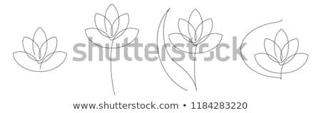 lotus zen flower vector design set yoga decorative background   boho style stock photo © redkoala