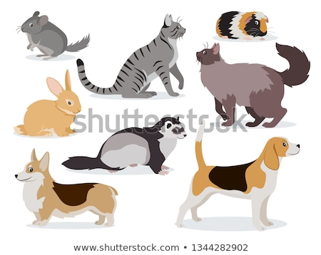 Pets icon set, cute gray chinchilla, fluffy ferret, smooth coated and domestic long-haired cats, cor Stock photo © MarySan