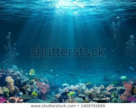 коралловый · риф · морем · иллюстрация · фон · искусства · синий - Сток-фото © colematt